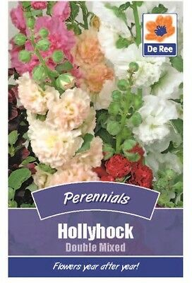 2 Packs of Hollyhock Double Mixed Flower Perennial Seeds, 40 Seeds per pack