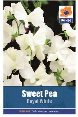 2 Packs of Sweet Pea, Royal White Flower Seeds, Approximately 10 seeds per pack!
