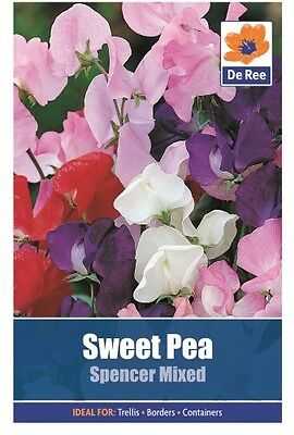 2 Packs of Sweet Pea: Spencer Mixed Flower Seeds, Approx 20 seeds per pack