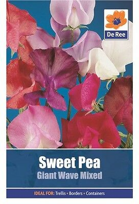 2 Packs of Sweet Pea Giant Wave Mixed Flower Seeds, Approx 19 Seeds per pack
