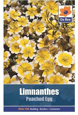 2 Packs of Limnanthes Poached Egg Summer Flower Seeds, Approx 35 seeds per pack
