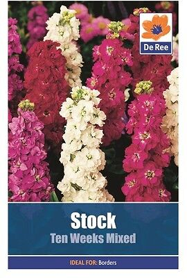 2 Packs of Stock Ten Weeks Mixed Summer Flower Seeds, Approx 125 seeds per pack