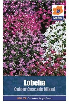 2 Packs of Lobelia Colour Cascade Mixed Flower Seeds, Approx 1866 seeds per pack
