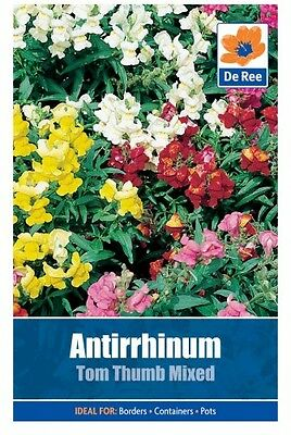 2 Packs of Antirrhinum Tom Thumb Mixed Flower Seeds, Approx 1310 seeds per pack