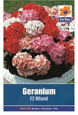 2 Packs of Geranium F2 Mixed Flower Seeds, Approx 8 seeds per pack