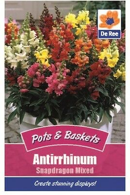 2 Packs of Antirrhinum Snapdragon Mixed Flower Seeds, Approx 420 seeds per pack
