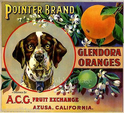 Pointer Orange Crate Label Art German Shorthaired Dog ACG Fruit Ex. Azuza CA
