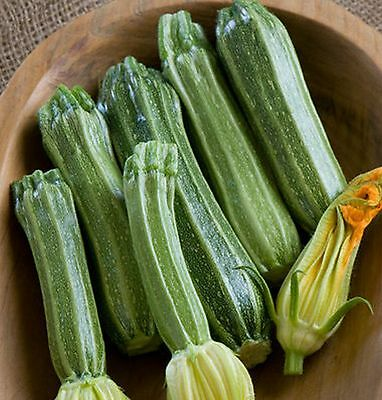 COSTA ROMANESQUE ZUCCHINI (COURGETTE) - 15 seeds (HERITAGE)