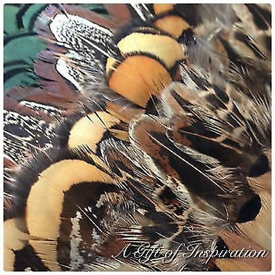 Mix of 25 Amazing Natural Pheasant feathers 5 of each Colour DIY Craft Jewelery