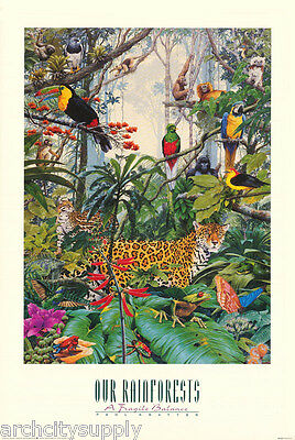 POSTER : ANIMALS : OUR RAINFORESTS  by PAUL KRATTNER - FREE SHIP  #ALN525  LW7 N