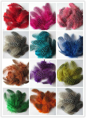 Wholesale  20-100 pcs beautiful guinea fowl feathers 6-10 cm /2.5-4 inch