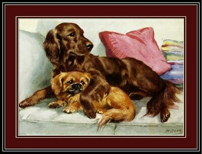 English Picture Poster Print Irish Setter Pekingese Dog Dogs Puppy Puppies Art