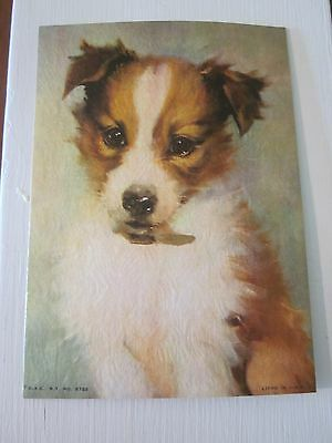 VINTAGE LITHO PRINT - MINIATURE - SHETLAND COLLIE PUP - TITLE/ARTIST UNKNOWN