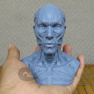 Pocket Size Male 1:4 Head Sculpture Anatomy Superficial Muscle Drawing 10003