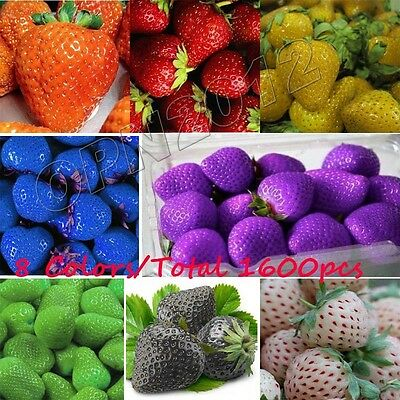 1600 PCS Strawberry Seeds Nutritious Delicious Fruit Vegetables Home Giant Sweet