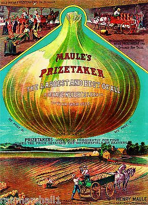Maule's Prizetaker Vintage Vegetable Seed Packet Catalogue Advertisement Poster