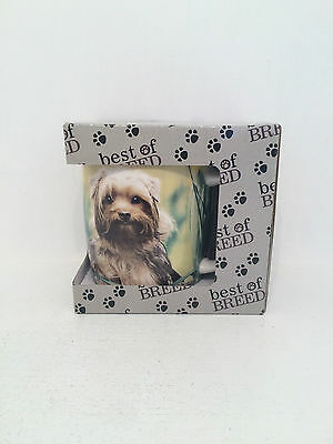 Yorkshire Terrier Yorkie by Best of Breed BOB Mug BRAND NEW BOXED