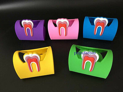 5pcs Dentistry Rubber Dental Teeth Tooth Name Card Holder Case