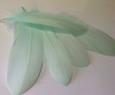NEW!! Pack of 5 x 13-20cm Gorgeous Mint Green Goose feathers for craft/millinery