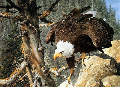 Modern Home Decor HD Prints oil painting on canvas 16x20inch Eagle NTD032