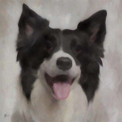 "Border Collie Black White GEP Signed 12"" x 12"" Art Print / Painting / Watercolor"