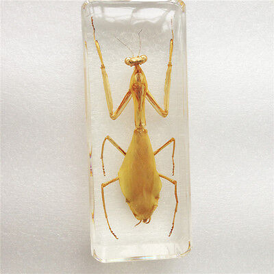 1Pc Praying Mantis Insect Specimen in Clear large Lucite Paperweight