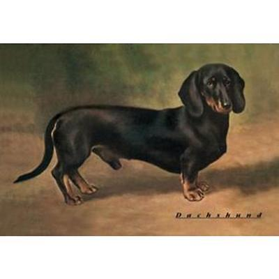 """Beautiful 20""""x 30"""" Reproduction 1900s Print of a Dachshund Ready for Framing"""