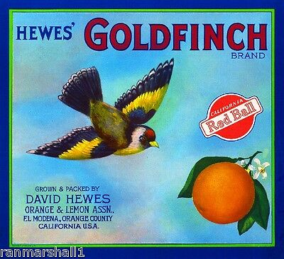 El Modena Highlands Hewes' Goldfinch #3 Orange Citrus Fruit Crate Label Print