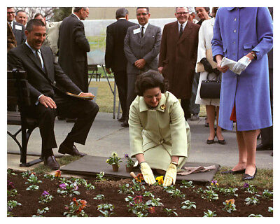 First Lady Bird Johnson Planting Flowers With Stewart Udall 8 x 10 Photo