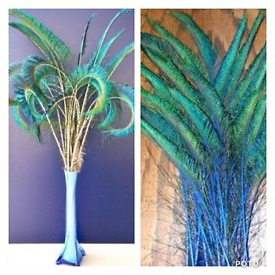 5 Blue Dyed 30-35cm Natural Sword Peacock Feathers DIY Art Craft Millinery Vase