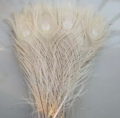 5pcs Cream Off White 25-30cm Peacock Eye Natural Feathers DIY Craft Millinery