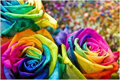 Rare Multi-Colors Rainbow Rose Flower Seeds Garden Plant, Other Colors