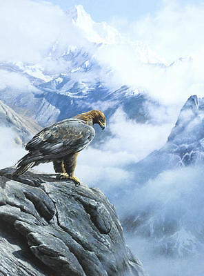 Modern Home Decor HD Prints oil painting art on canvas 16x20inch Eagle NTD097