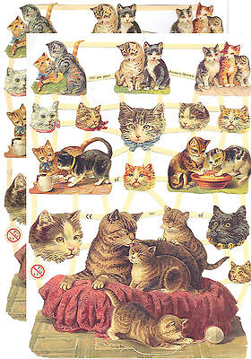 Chromo EF Découpis Chat 7301 Embossed Illustrations Cat