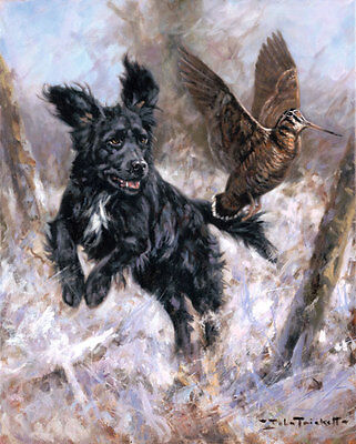 Cocker Spaniel and Woodcock, Christmas cards pack of 10 by John Trickett. C429X