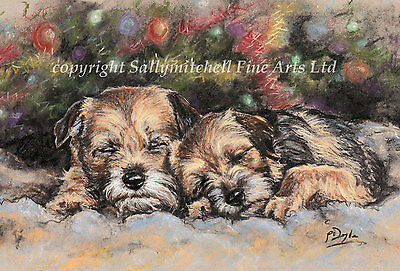 Border Terrier dog, Christmas cards pack of 10 by Paul Doyle. C452X