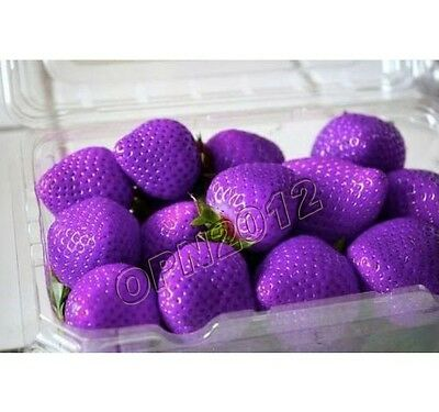 200x Purple Everbearing Strawberry Plant Seeds Delicious Fruit Berry Garden Yard