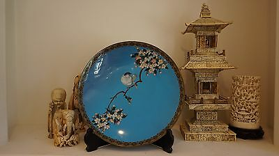 Beautiful Early 1900 Large Japanese Cloisonne Plate w Sparrow & Cherry Blossom