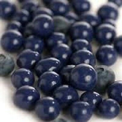 Sconza Milk Chocolate Blueberries - Free Expedited Shipping!