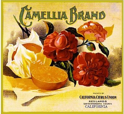 Redlands San Bernardino Camellia #03 Orange Citrus Fruit Crate Label Art Print