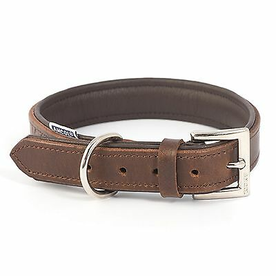 Ancol Vintage Leather Dog Puppy Padded Collar Chestnut Brown