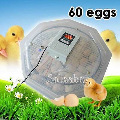 60 Poultry Egg Poultry Eggs Digital Semi Automatic Utomatic Incubator