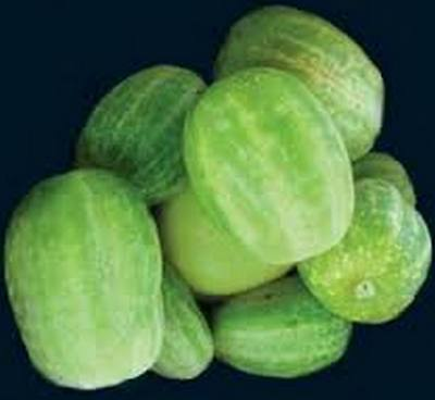 AUSTRALIAN RICHMOND RIVER GREEN APPLE CUCUMBER - 25 seeds (HERITAGE)