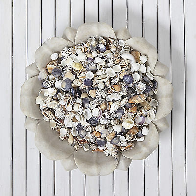 200g Mixed small Shells / Beach  Wedding / Nautical decor / Table Scatters