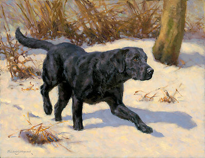 Black Labrador Dog, Christmas cards pack of 10 by Fred Haycock. C444X