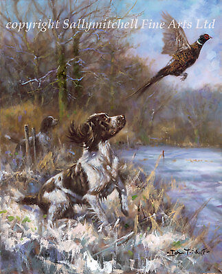 Springer Spaniel dog and Pheasant Shooting Christmas cards pack of 10.  C413x