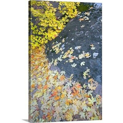 Solid-Faced Canvas Print Wall Art entitled Fallen Autumn Color Maple Tree Leaves