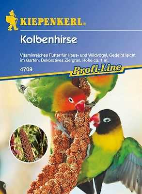 Kiepenkerl - Foxtail millet 4709 Seeds for Peck For Birds