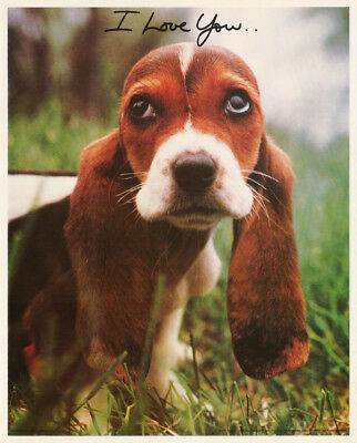 Small Poster:animals:dog: Bassett Hound -  I Love You  Free Ship #13-761  Rc13 E