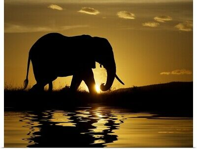Poster Print Wall Art entitled African elephant in silhouette at sunrise, Kenya,